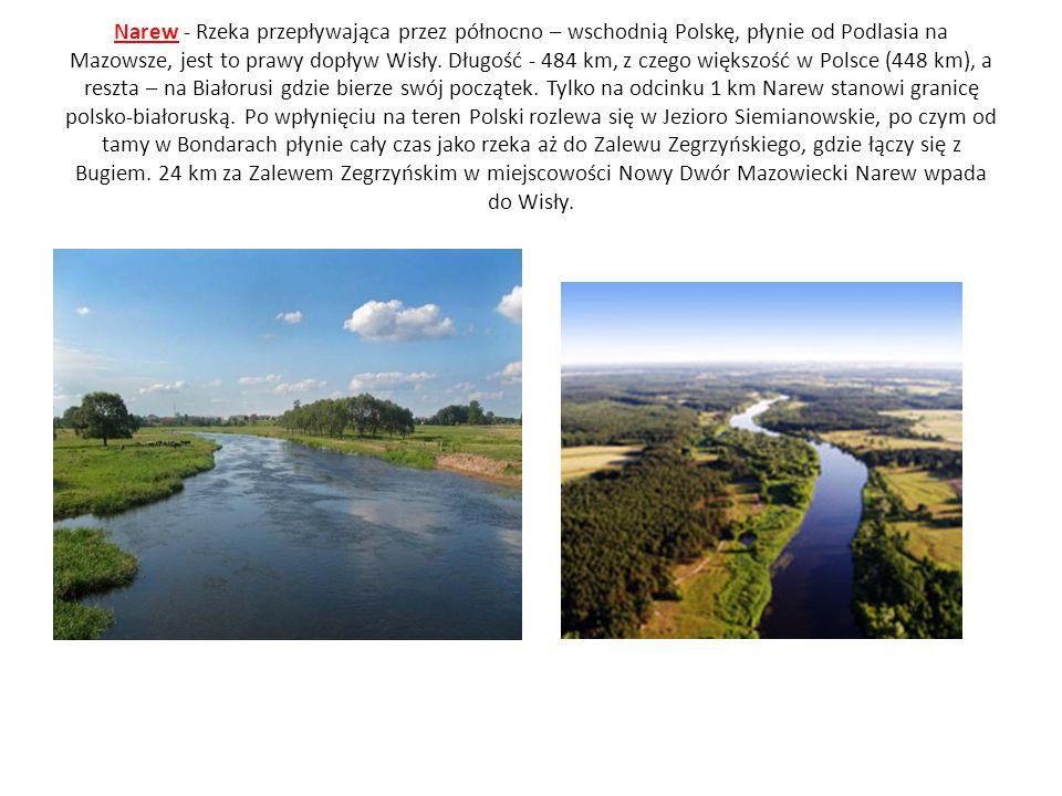 Narew - Rzeka przepływająca przez północno – wschodnią Polskę, płynie od Podlasia na Mazowsze, jest to prawy dopływ Wisły. Długość - 484 km, z czego w
