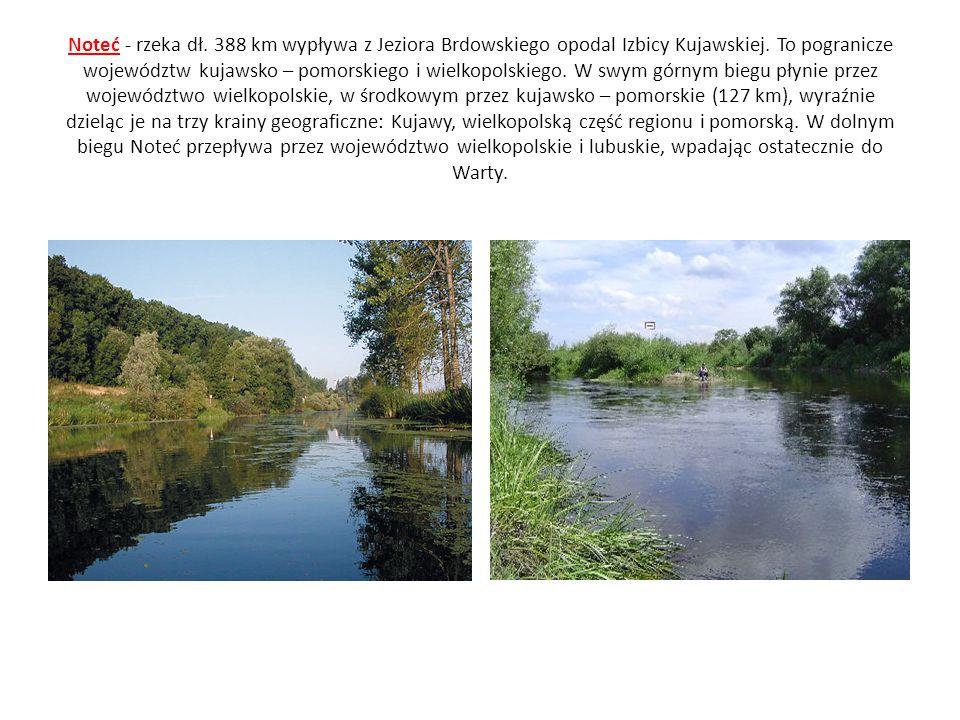 Noteć - rzeka dł. 388 km wypływa z Jeziora Brdowskiego opodal Izbicy Kujawskiej. To pogranicze województw kujawsko – pomorskiego i wielkopolskiego. W