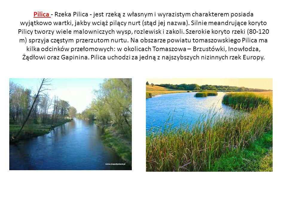 Pilica - Rzeka Pilica - jest rzeką z własnym i wyrazistym charakterem posiada wyjątkowo wartki, jakby wciąż pilący nurt (stąd jej nazwa). Silnie meand
