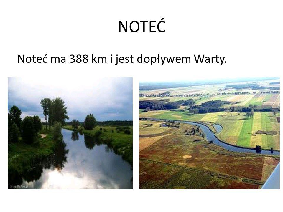 NOTEĆ Noteć ma 388 km i jest dopływem Warty.