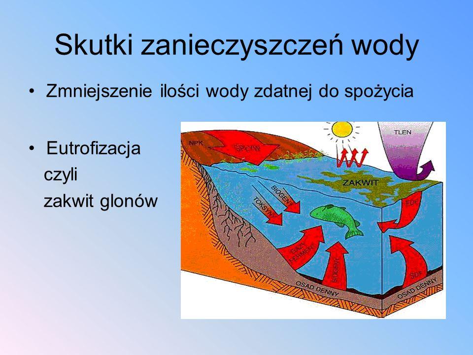Skutki zanieczyszczeń wody Zmniejszenie ilości wody zdatnej do spożycia Eutrofizacja czyli zakwit glonów