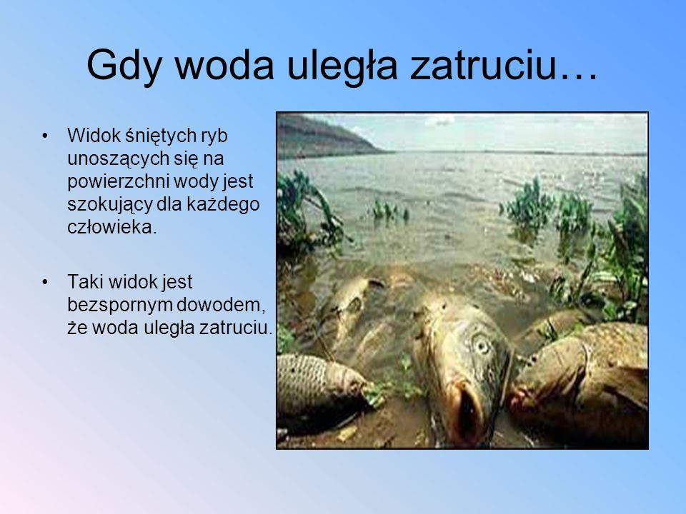 Gdy woda uległa zatruciu… Widok śniętych ryb unoszących się na powierzchni wody jest szokujący dla każdego człowieka. Taki widok jest bezspornym dowod
