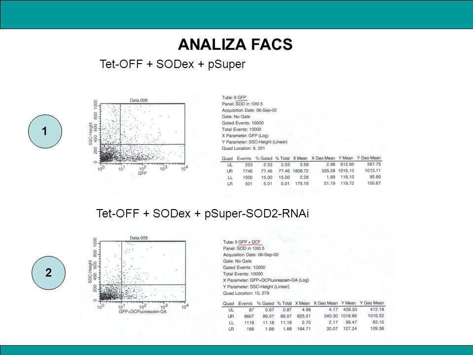 Tet-OFF + SODex + pSuper Tet-OFF + SODex + pSuper-SOD2-RNAi 1 2 ANALIZA FACS