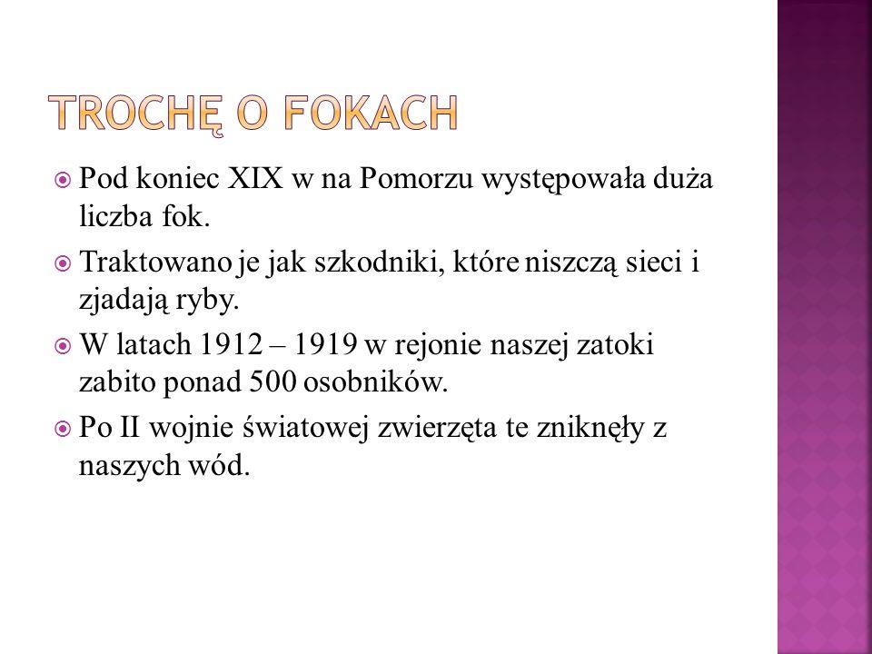  Pod koniec XIX w na Pomorzu występowała duża liczba fok.