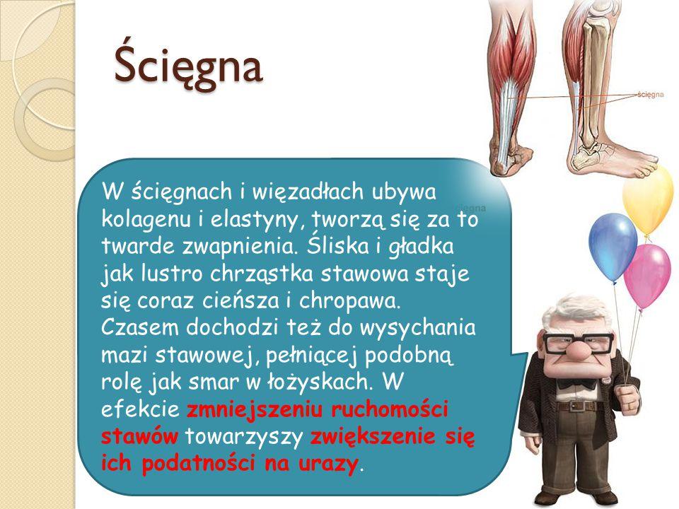 Ścięgna W ścięgnach i więzadłach ubywa kolagenu i elastyny, tworzą się za to twarde zwapnienia. Śliska i gładka jak lustro chrząstka stawowa staje się