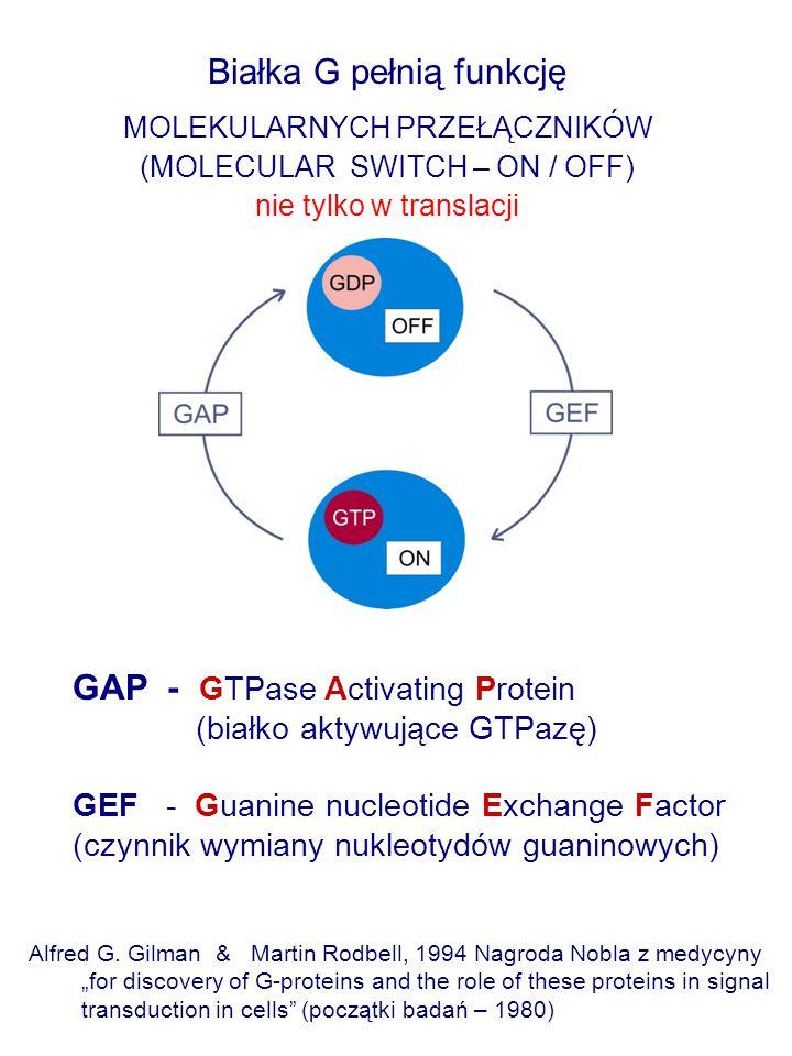 Białka G pełnią funkcję MOLEKULARNYCH PRZEŁĄCZNIKÓW (MOLECULAR SWITCH – ON / OFF) nie tylko w translacji Alfred G. Gilman & Martin Rodbell, 1994 Nagro