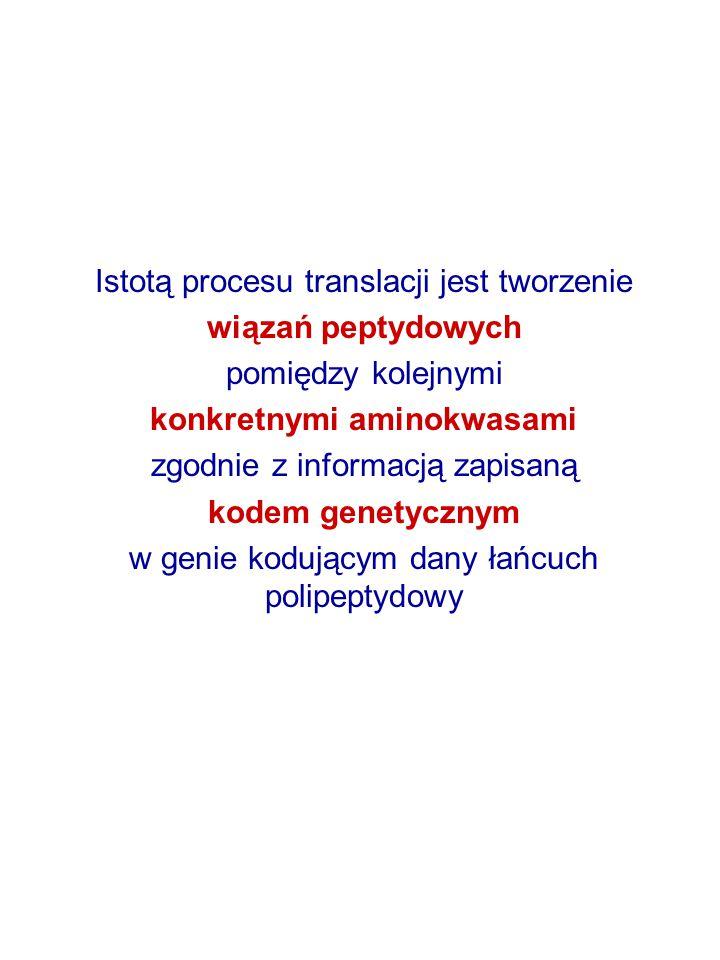 Istotą procesu translacji jest tworzenie wiązań peptydowych pomiędzy kolejnymi konkretnymi aminokwasami zgodnie z informacją zapisaną kodem genetyczny