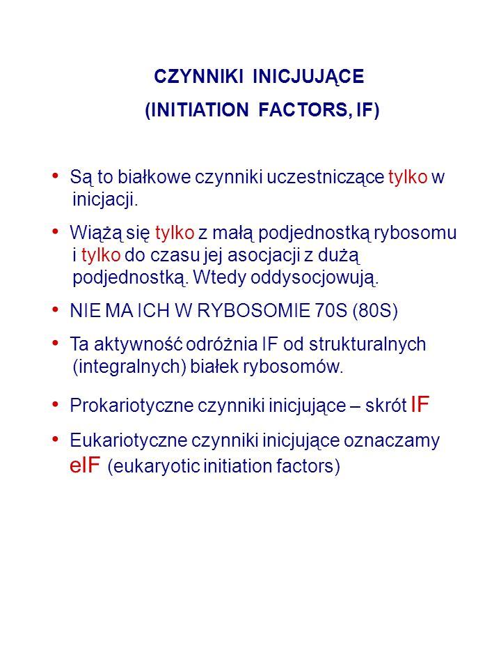 CZYNNIKI INICJUJĄCE (INITIATION FACTORS, IF) Są to białkowe czynniki uczestniczące tylko w inicjacji. Wiążą się tylko z małą podjednostką rybosomu i t