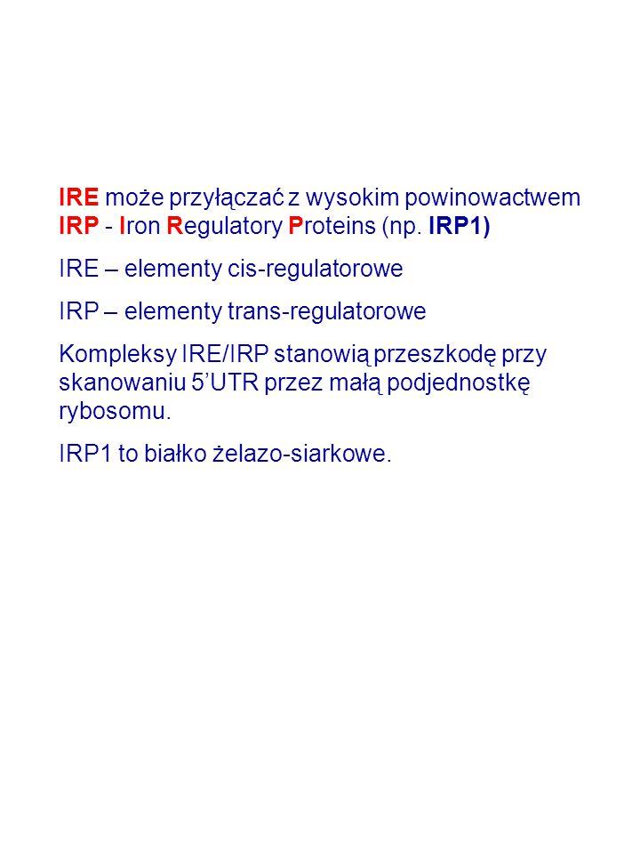 IRE może przyłączać z wysokim powinowactwem IRP - Iron Regulatory Proteins (np. IRP1) IRE – elementy cis-regulatorowe IRP – elementy trans-regulatorow