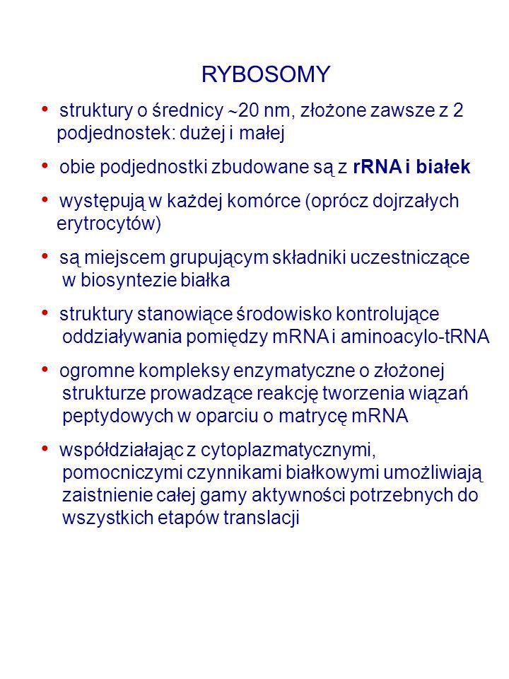 INICJATOROWY tRNA Synteza białka zaczyna się od metioniny - metionina jest pierwszym aminokwasem tworzącego się łańcucha polipeptydowego Sygnał stanowi inicjatorowy kodon AUG Istnieją dwa typy tRNA mogących wiązać ten aminokwas i ten kodon (AUG): Uczestniczący w elongacji: Uczestniczący w inicjacji: Ta sama syntetaza aminoacylo-tRNA prowadzi obie reakcje (przyłącza resztę metioniny do obu rodzajów tRNA U bakterii oraz w organellach (chloroplastach, mitochondriach) inicjatorowy tRNA wiąże metioninę, której grupa aminowa zostaje później FORMYLOWANA  N-formylo-metionylo-tRNA (fMet-tRNA f ).