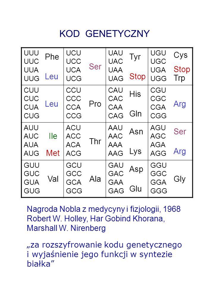 AMINOKWASY - KODONY – tRNA Francis Crick – 1966 – hipoteza chwiejności zasad (wobble hypothesis) zasada 5' antykodonu (tRNA ) zasada 3' kodonu (mRNA) AU UA lub G CG GU lub C IA lub U lub C