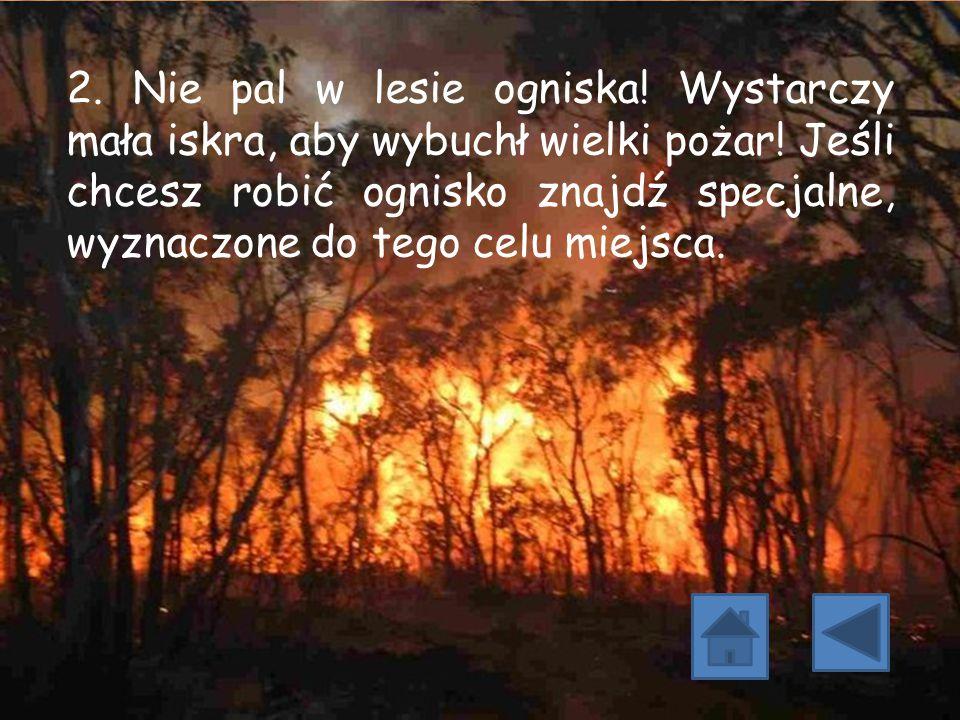 2. Nie pal w lesie ogniska! Wystarczy mała iskra, aby wybuchł wielki pożar! Jeśli chcesz robić ognisko znajdź specjalne, wyznaczone do tego celu miejs
