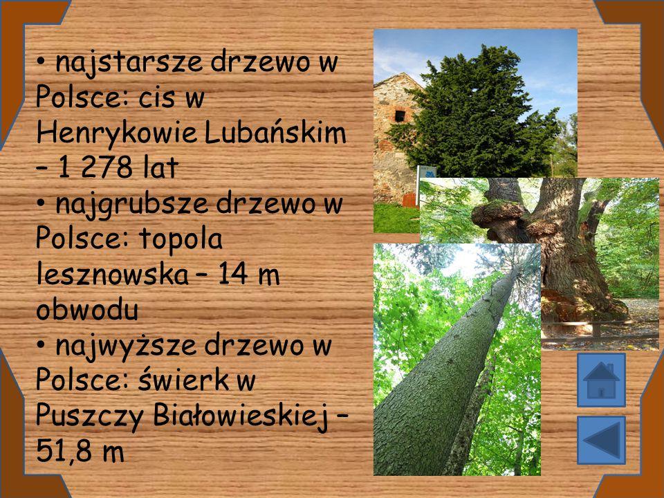 najstarsze drzewo w Polsce: cis w Henrykowie Lubańskim – 1 278 lat najgrubsze drzewo w Polsce: topola lesznowska – 14 m obwodu najwyższe drzewo w Pols