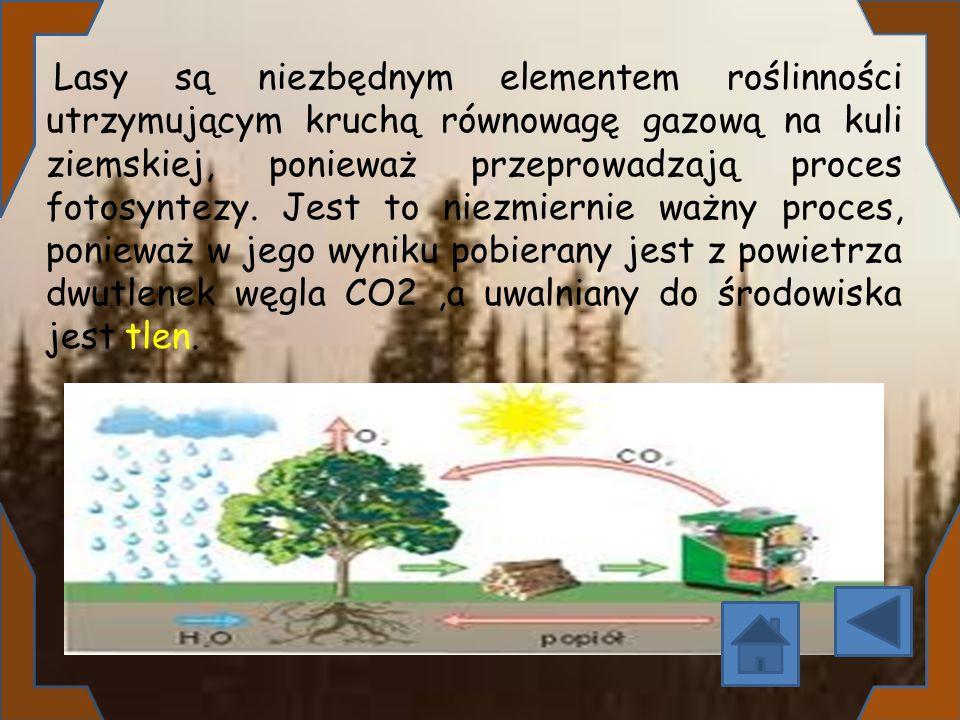 Lasy są niezbędnym elementem roślinności utrzymującym kruchą równowagę gazową na kuli ziemskiej, ponieważ przeprowadzają proces fotosyntezy. Jest to n