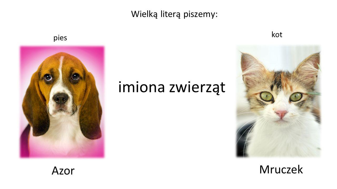 imiona zwierząt pies kot Azor Mruczek Wielką literą piszemy: