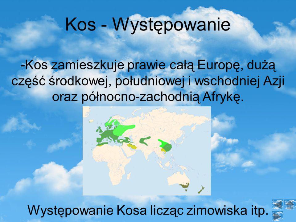 Kos - Występowanie -Kos zamieszkuje prawie całą Europę, dużą część środkowej, południowej i wschodniej Azji oraz północno-zachodnią Afrykę.