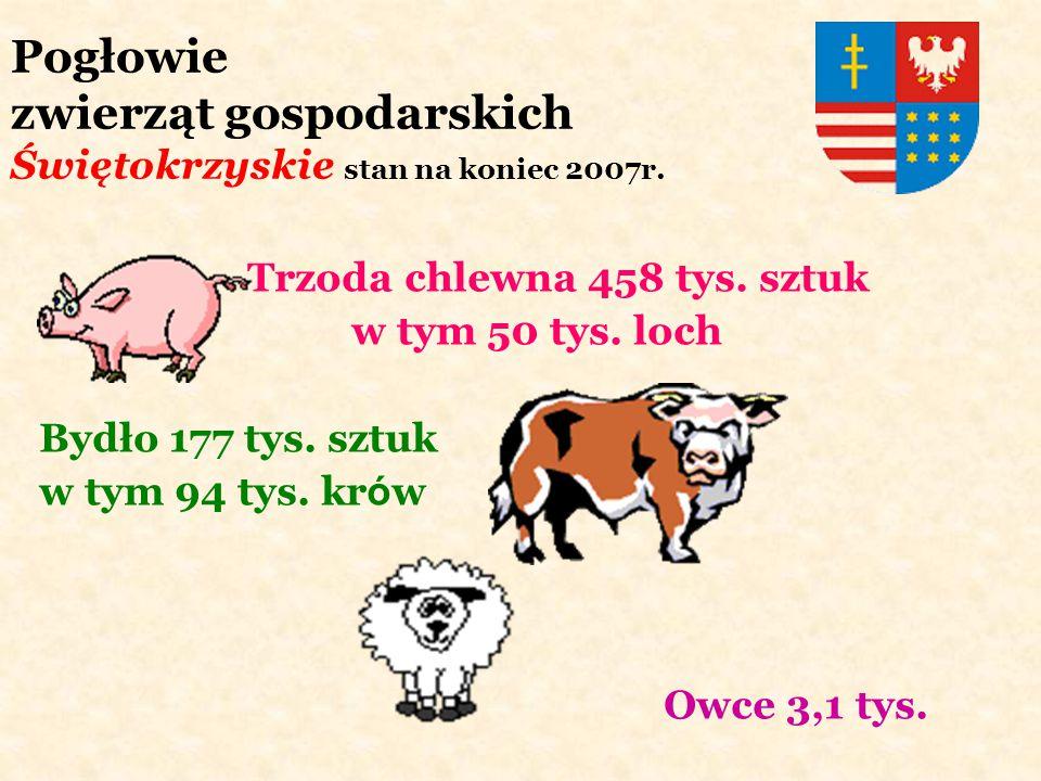 Pogłowie zwierząt gospodarskich Świętokrzyskie stan na koniec 2007r. Trzoda chlewna 458 tys. sztuk w tym 50 tys. loch Bydło 177 tys. sztuk w tym 94 ty