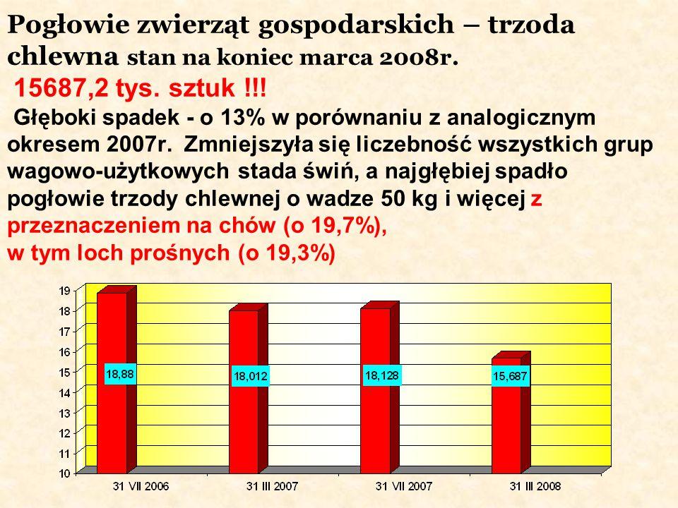 Pogłowie zwierząt gospodarskich – trzoda chlewna stan na koniec marca 2008r. 15687,2 tys. sztuk !!! Głęboki spadek - o 13% w porównaniu z analogicznym