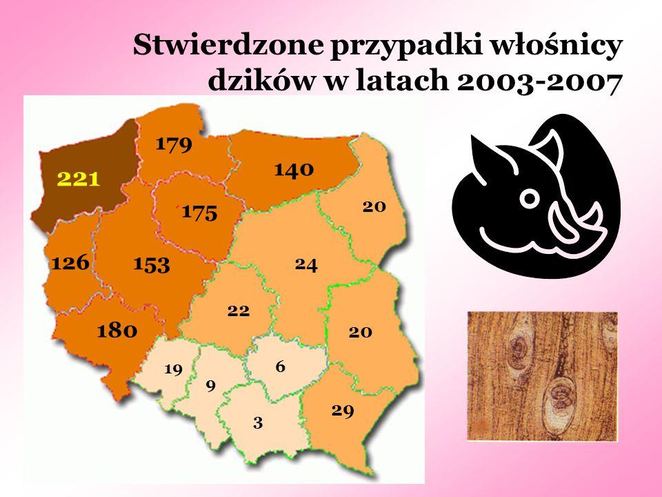 Stwierdzone przypadki włośnicy dzików w latach 2003-2007 3 6 9 19 20 29 22 24 20 126 140 153 175 179 180 221