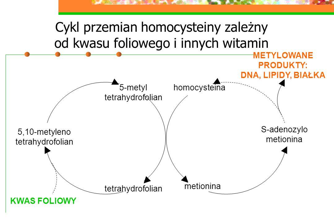 Cykl przemian homocysteiny zależny od kwasu foliowego i innych witamin homocysteina metionina S-adenozylo metionina 5-metyl tetrahydrofolian 5,10-mety
