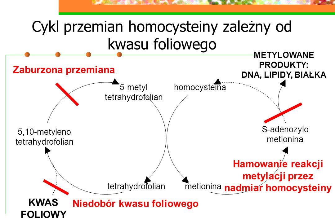 Cykl przemian homocysteiny zależny od kwasu foliowego homocysteina metionina S-adenozylo metionina 5-metyl tetrahydrofolian 5,10-metyleno tetrahydrofo