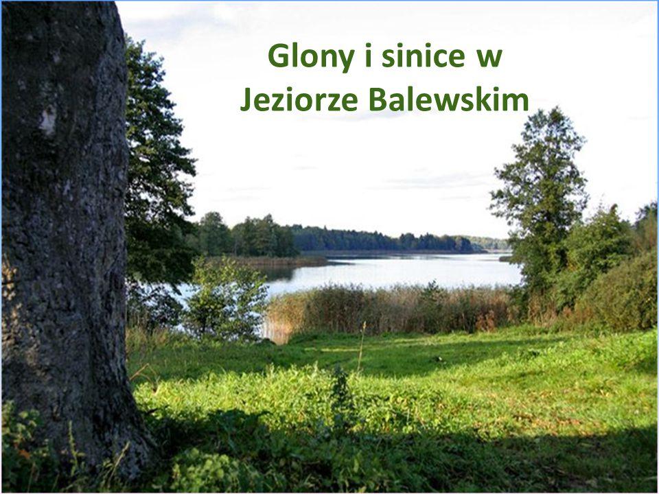 Glony i sinice w jeziorze Balewskim Glony i sinice w Jeziorze Balewskim