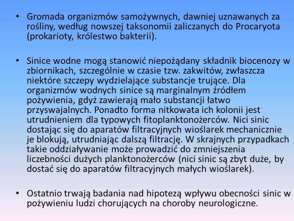 Gromada organizmów samożywnych, dawniej uznawanych za rośliny, według nowszej taksonomii zaliczanych do Procaryota (prokarioty, królestwo bakterii). S