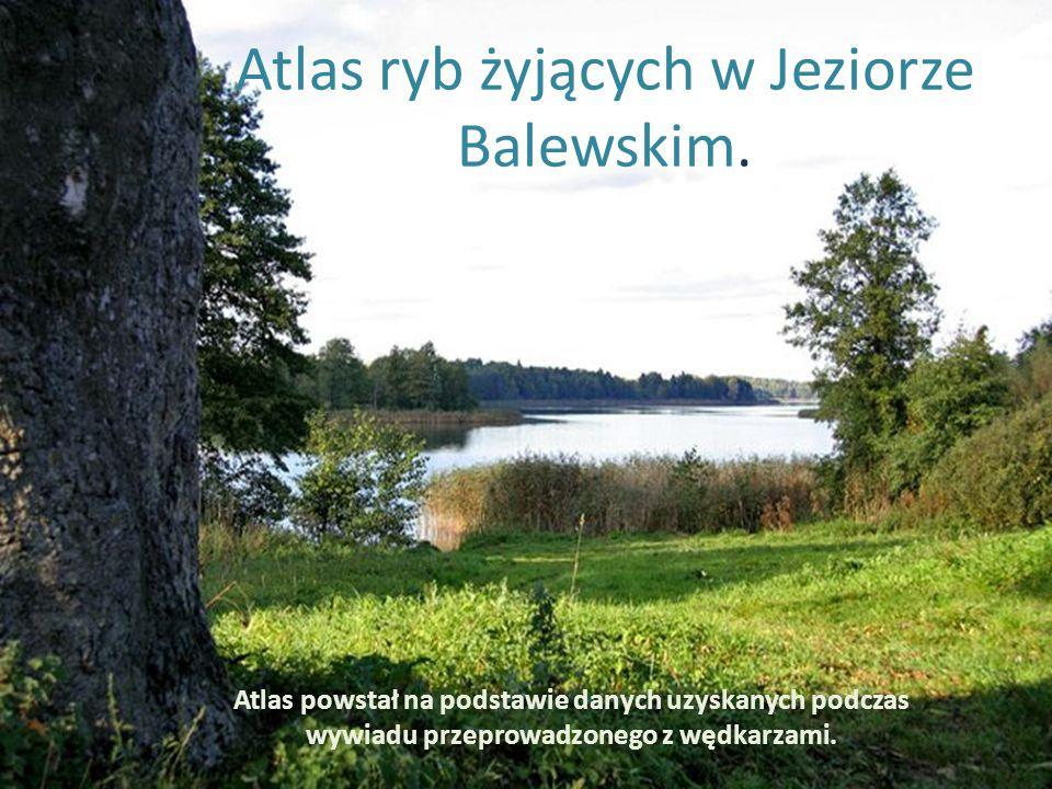 Atlas ryb żyjących w Jeziorze Balewskim. Atlas powstał na podstawie danych uzyskanych podczas wywiadu przeprowadzonego z wędkarzami.
