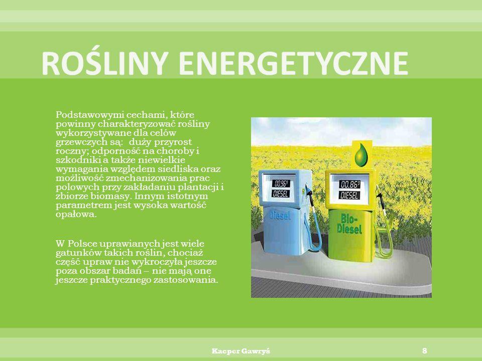 Najbardziej popularnymi roślinami energetycznymi w Polsce są:  wierzba  miskantus  ślazowiec  rzepak 7Kacper Gawryś
