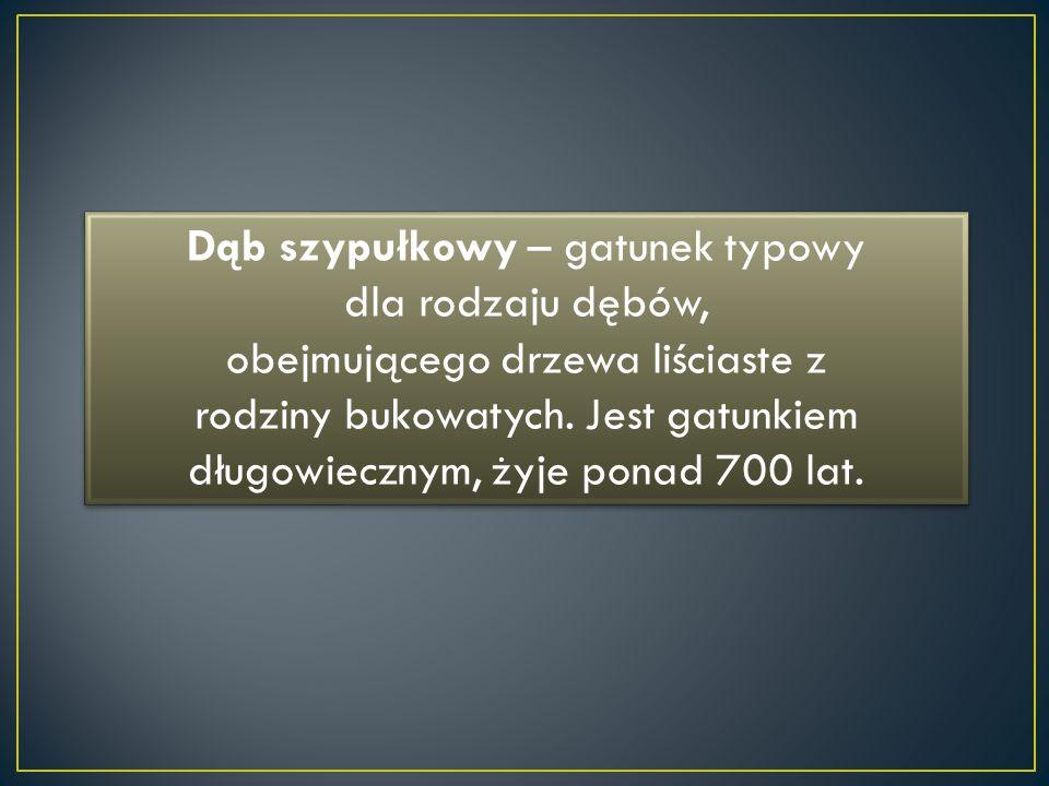 Dąb szypułkowy – gatunek typowy dla rodzaju dębów, obejmującego drzewa liściaste z rodziny bukowatych. Jest gatunkiem długowiecznym, żyje ponad 700 la