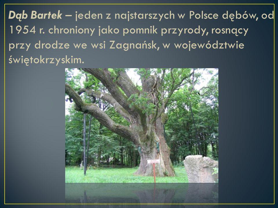 Dąb Bartek – jeden z najstarszych w Polsce dębów, od 1954 r. chroniony jako pomnik przyrody, rosnący przy drodze we wsi Zagnańsk, w województwie święt
