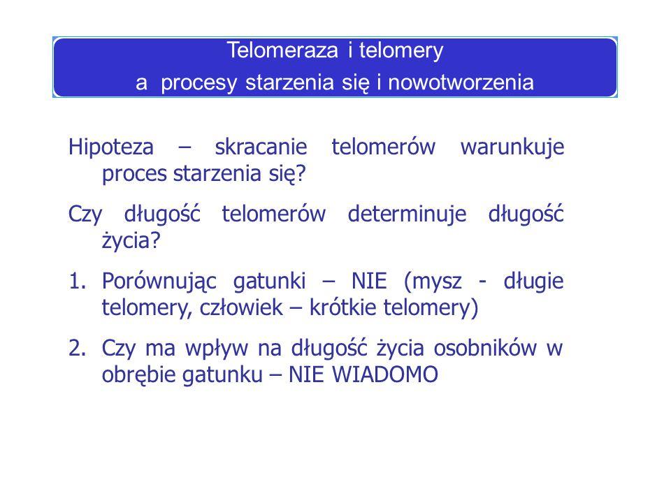 Telomeraza i telomery a procesy starzenia się i nowotworzenia Hipoteza – skracanie telomerów warunkuje proces starzenia się? Czy długość telomerów det