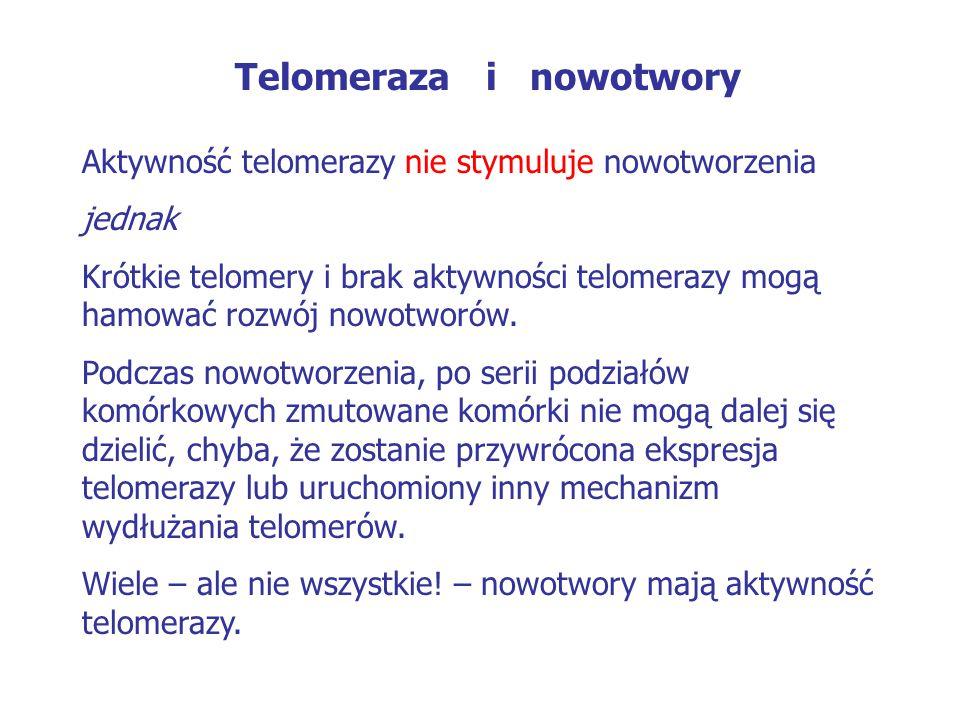 Telomeraza i nowotwory Aktywność telomerazy nie stymuluje nowotworzenia jednak Krótkie telomery i brak aktywności telomerazy mogą hamować rozwój nowot