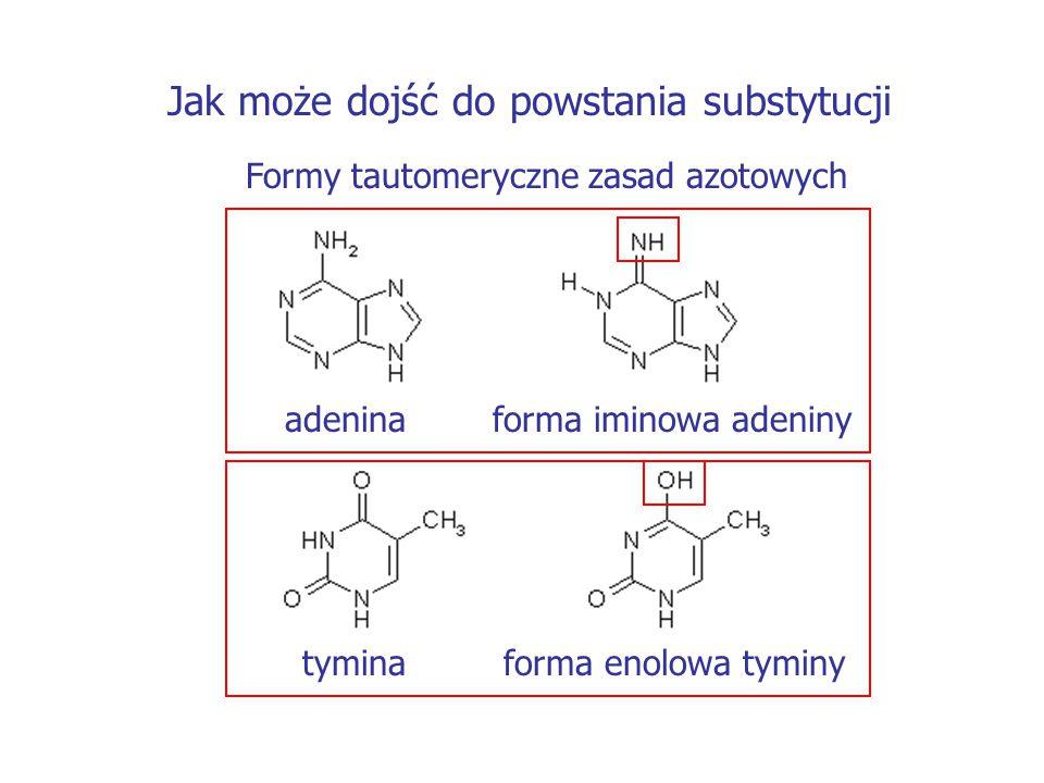 Jak może dojść do powstania substytucji Formy tautomeryczne zasad azotowych adenina forma iminowa adeniny tymina forma enolowa tyminy