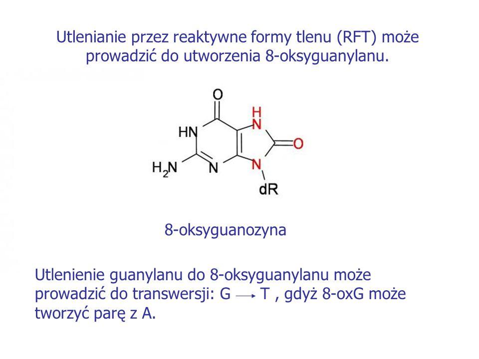 Utlenianie przez reaktywne formy tlenu (RFT) może prowadzić do utworzenia 8-oksyguanylanu. 8-oksyguanozyna Utlenienie guanylanu do 8-oksyguanylanu moż