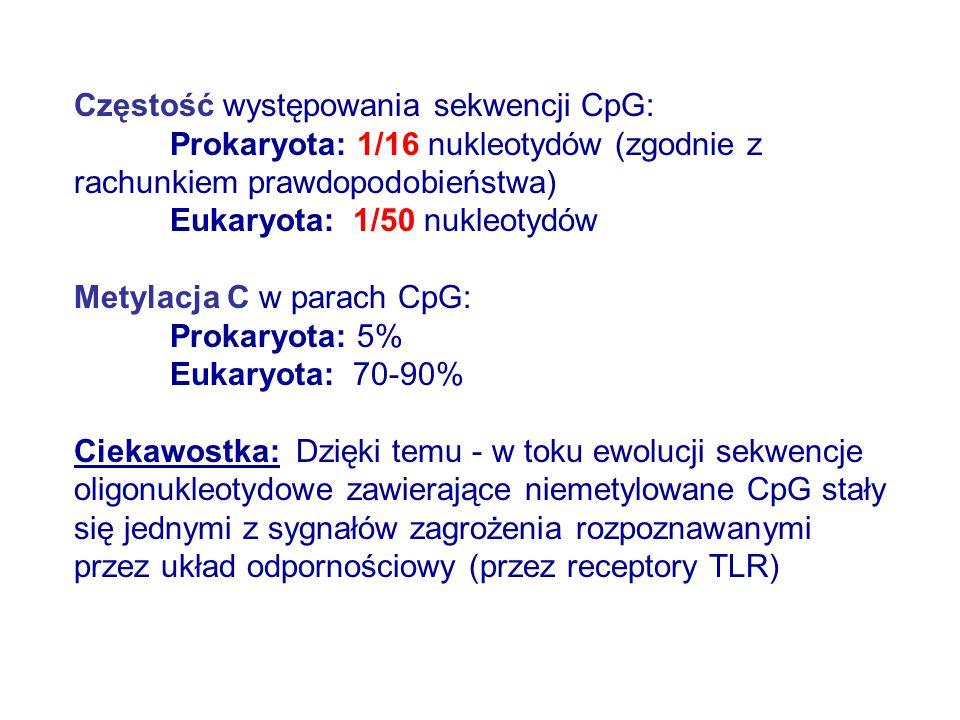 Częstość występowania sekwencji CpG: Prokaryota: 1/16 nukleotydów (zgodnie z rachunkiem prawdopodobieństwa) Eukaryota: 1/50 nukleotydów Metylacja C w