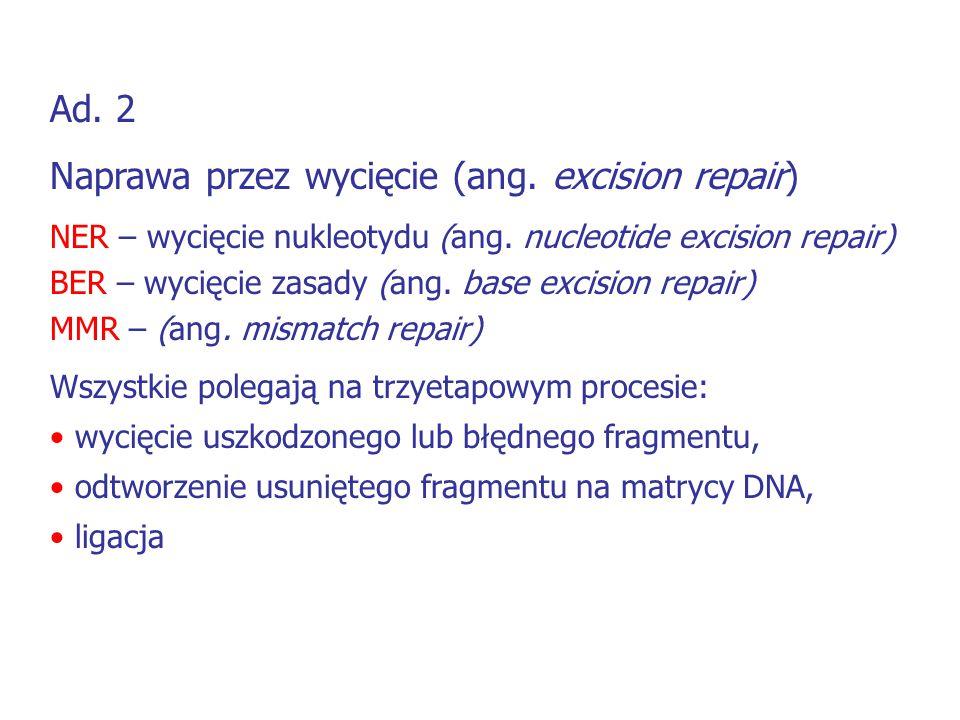 Ad. 2 Naprawa przez wycięcie (ang. excision repair) NER – wycięcie nukleotydu (ang. nucleotide excision repair) BER – wycięcie zasady (ang. base excis