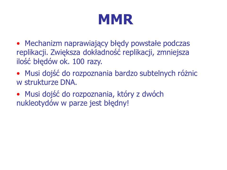 MMR Mechanizm naprawiający błędy powstałe podczas replikacji. Zwiększa dokładność replikacji, zmniejsza ilość błędów ok. 100 razy. Musi dojść do rozpo
