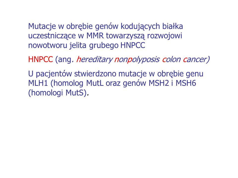 Mutacje w obrębie genów kodujących białka uczestniczące w MMR towarzyszą rozwojowi nowotworu jelita grubego HNPCC HNPCC (ang. hereditary nonpolyposis