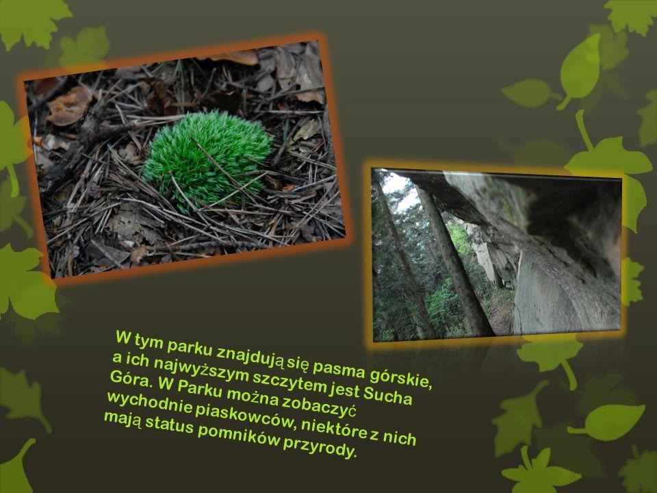 W tym parku znajduj ą si ę pasma górskie, a ich najwy ż szym szczytem jest Sucha Góra.