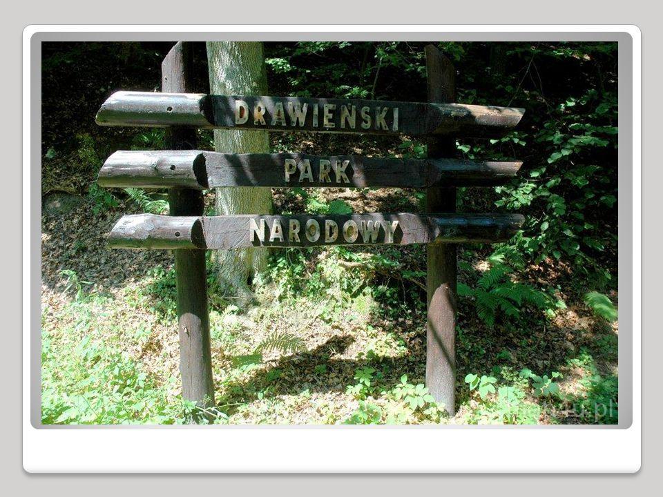 POŁOŻENIE Drawieński Park Narodowy położony jest w górnym biegu rzeki Drawy - dopływu Noteci.