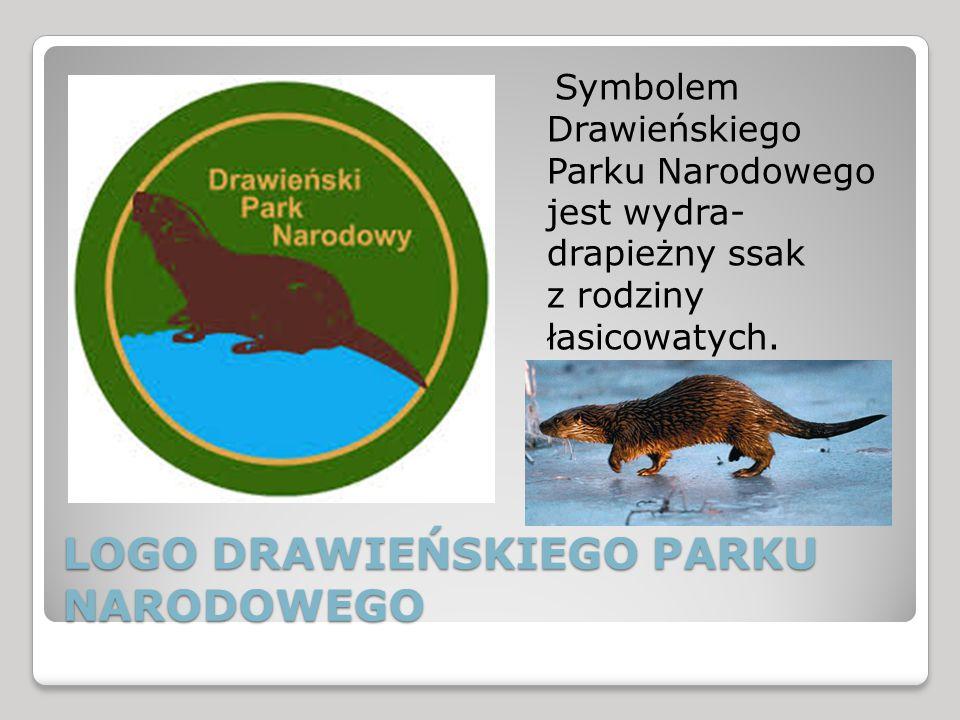 LOGO DRAWIEŃSKIEGO PARKU NARODOWEGO Symbolem Drawieńskiego Parku Narodowego jest wydra- drapieżny ssak z rodziny łasicowatych.