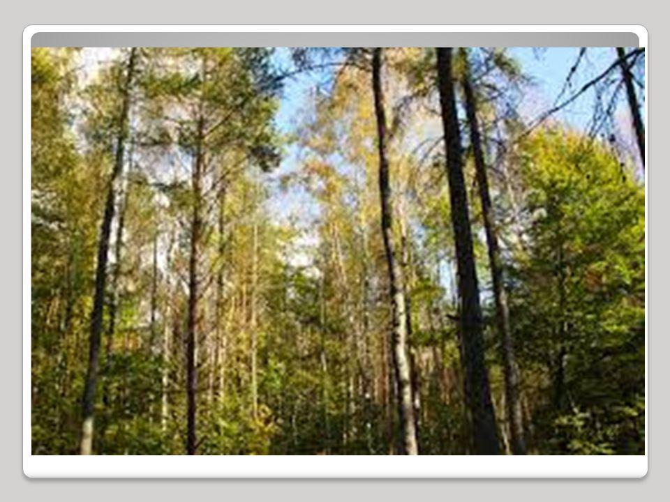 JEZIORA Około 0,1 powierzchni Drawieńskiego Parku Narodowego zajmuje 20 niewielkich jezior.