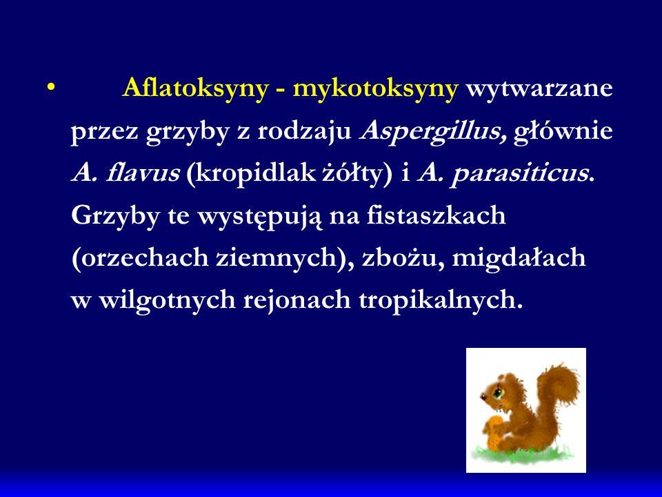 Aflatoksyny - mykotoksyny wytwarzane przez grzyby z rodzaju Aspergillus, głównie A. flavus (kropidlak żółty) i A. parasiticus. Grzyby te występują na