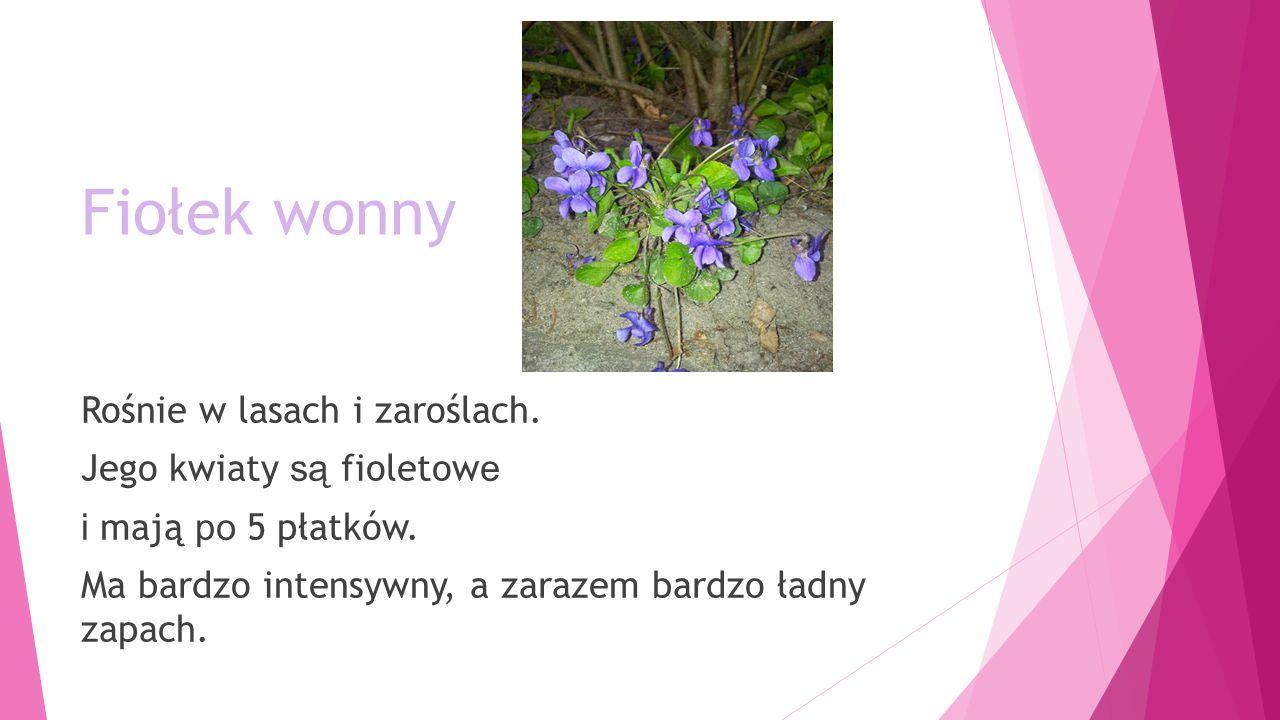 Fiołek wonny Rośnie w lasach i zaroślach.Jego kwiaty są fioletow e i mają po 5 płatków.
