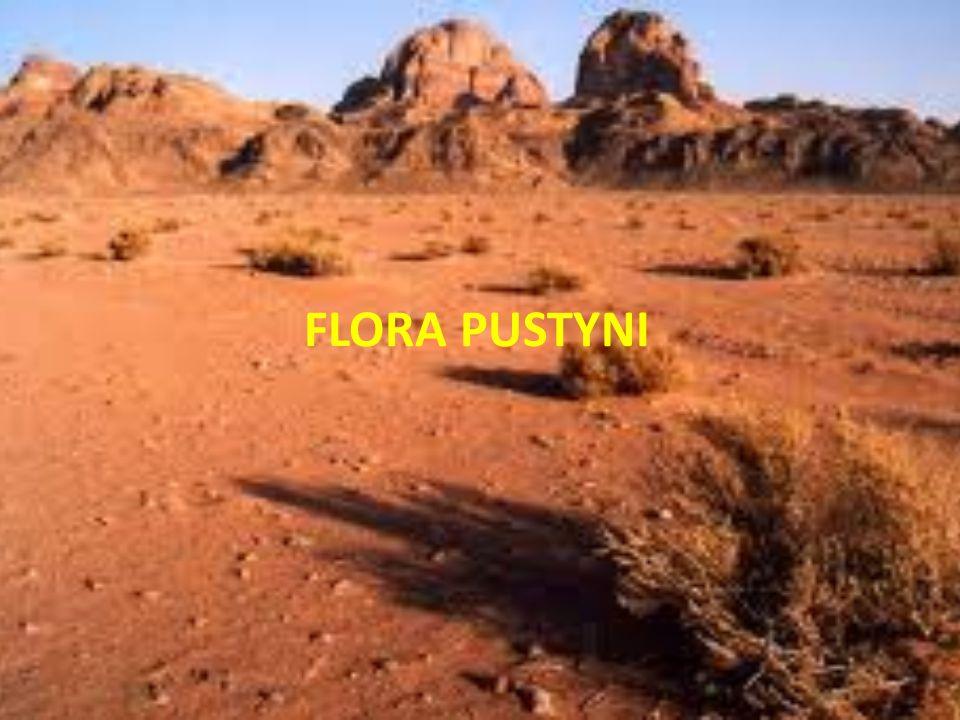FLORA PUSTYNI