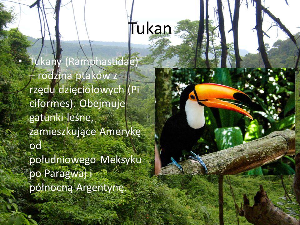Tukan Tukany (Ramphastidae) – rodzina ptaków z rzędu dzięciołowych (Pi ciformes). Obejmuje gatunki leśne, zamieszkujące Amerykę od południowego Meksyk