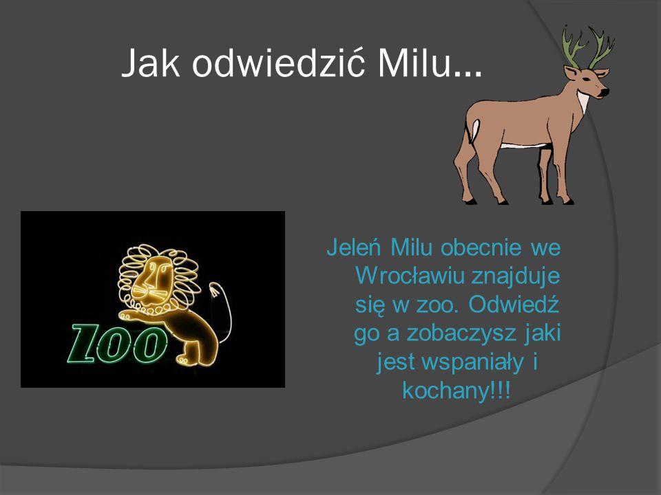 Jak odwiedzić Milu… Jeleń Milu obecnie we Wrocławiu znajduje się w zoo. Odwiedź go a zobaczysz jaki jest wspaniały i kochany!!!