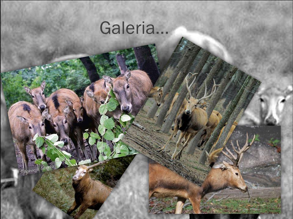 Galeria…