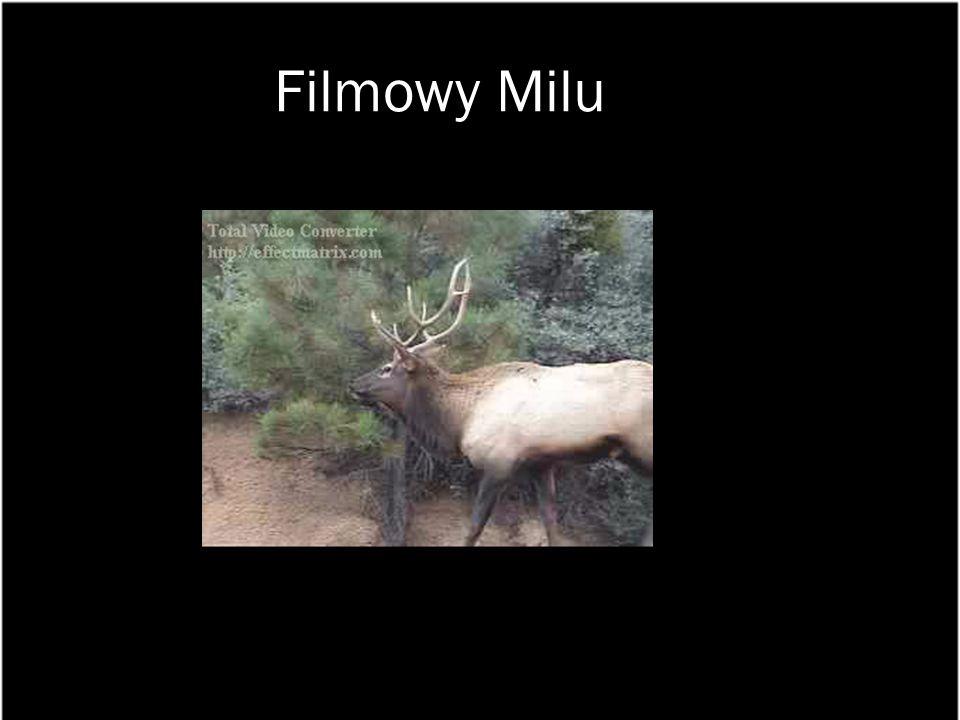 Filmowy Milu